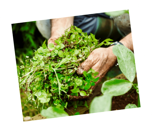 fort worth weed control