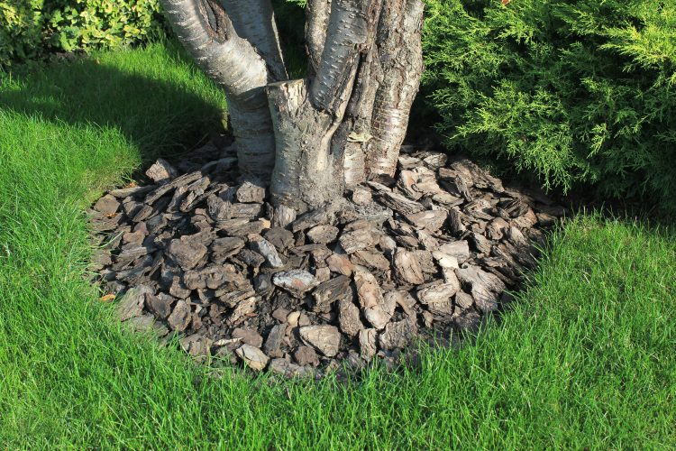 mulch covering tree roots